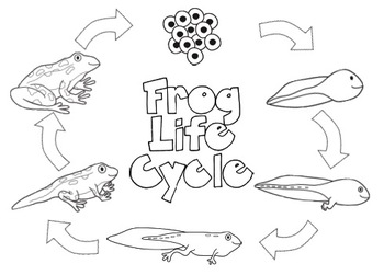 Frog Life-Cycle Journal