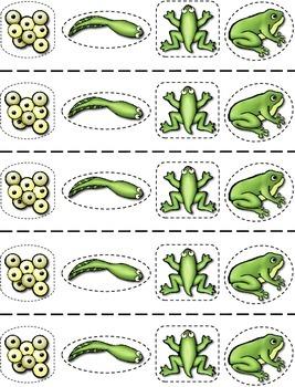 Frog Life Cycle Craftivity --- Lily Pad Life Cycle Wheel