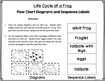 Frog Life Cycle Mini Lesson, Habitat Design Activity,  Creative Writing