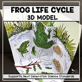 Frog Life Cycle Model - 3D Model - Distance Learning