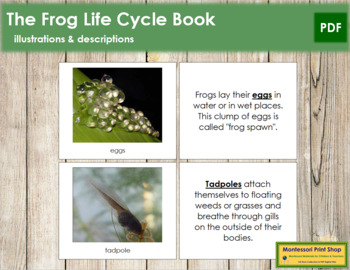 Frog Life Cycle Nomenclature Book