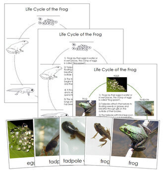 Frog Life Cycle Nomenclature Cards and Charts