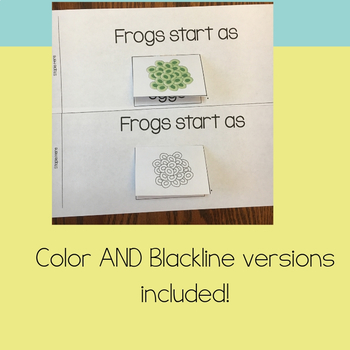 Life Cycle of a Frog Activities | Flip Book, Non-Fiction Text, and More!