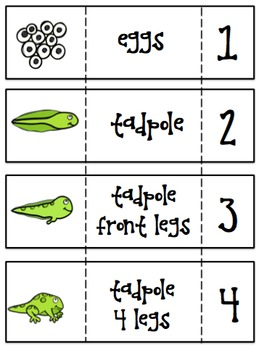 Frog Life Cycle - Pocket Chart Cards