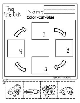 Frog Life Cycle Pocket Chart Cards