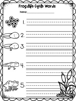 Frog Life Cycle Pocket Chart Pictures and Word Cards