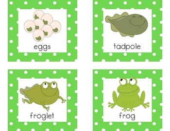 Frog Life Cycle Poster and Flash Card