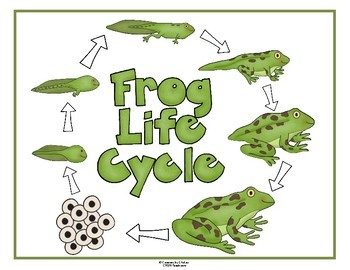Frog Life Cycle Poster And Worksheets By Creations By