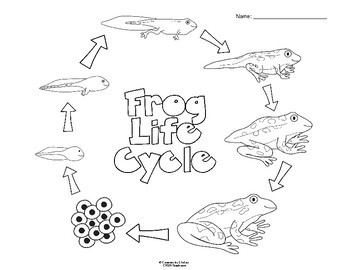 Frog Life Cycle Poster and Worksheets