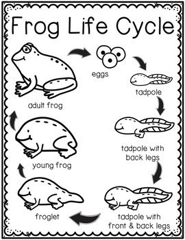 Frog Life Cycle Posters