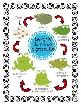 Frog Life Cycle Posters French ~ Le cycle de vie de la grenouille