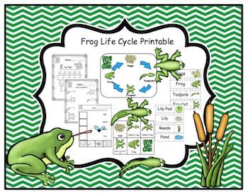 Frog Life Cycle Printable