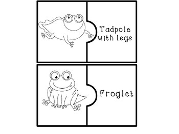 Frog Life Cycle Puzzles