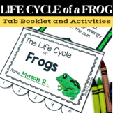 Frog Life Cycle Tab Book - Two Sizes - Metamorphosis