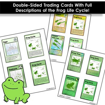 Frog Life Cycle - Trading Cards!