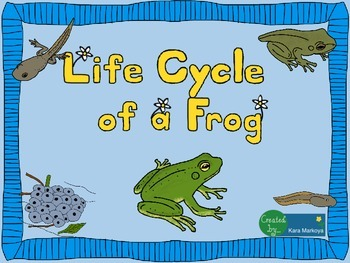 Frog Life Cycle Wheel and Teaching Cards
