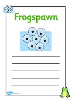 Frog Life Cycle Workbook