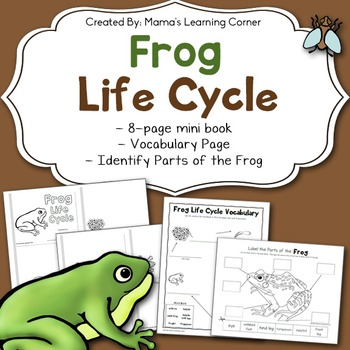 Frog Life Cycle Worksheets