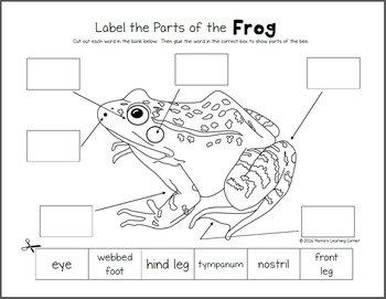 Frog Life Cycle Worksheets by Mama's Learning Corner | TpT
