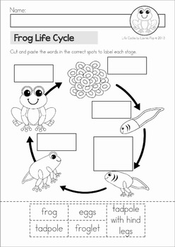 Original on life cycle of a frog for kids worksheet