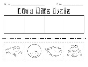 frog life cycle cut and paste by erin ward teachers pay teachers. Black Bedroom Furniture Sets. Home Design Ideas