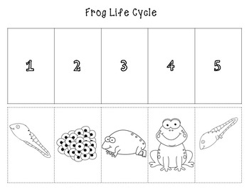 Frog Life Cycle cut and paste (color and b/w)