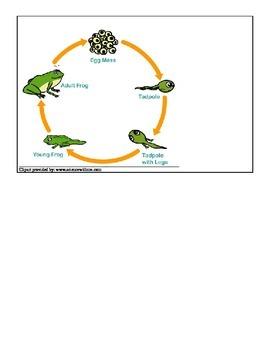 Frog Life Cycle lesson plan