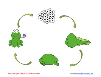 Frog Life Cycle/Sequencing