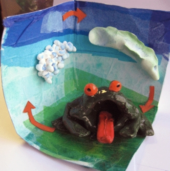 Frog Life Cycles with Clay