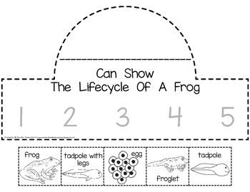 Frog Lifecycle Crown
