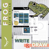 Frog Life Cycle Worksheet Directed Drawing Digital Learning