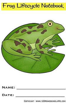 Frog Lifecycle Notebook {Preschool / Kindergarten / 1st / 2nd / 3rd / 4th grade)