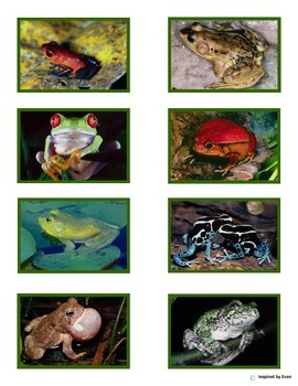 """""""Frog Match"""" Color to Black n White for Autism"""