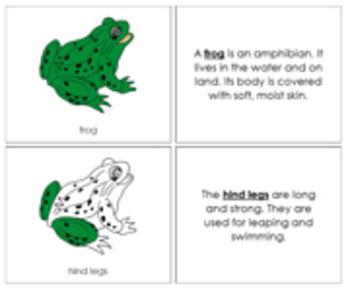 Frog Nomenclature Book