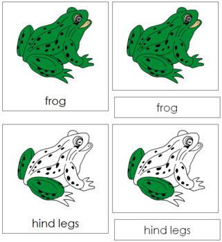 Frog Nomenclature Cards