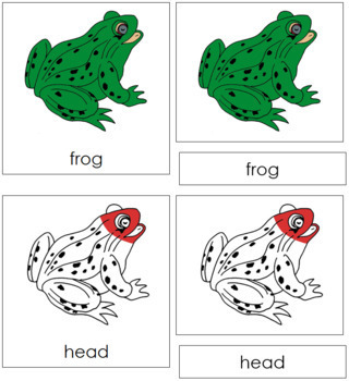 Frog Nomenclature Cards (Red)