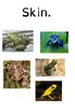 Frog Parts (STEM + PBL)