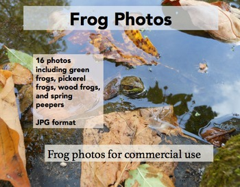 Frog Photos for Commercial Use