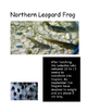 Frog Research Pictures