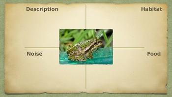 Frog T chart