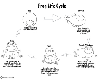 Frog and Butterfly Life Cycle Activities