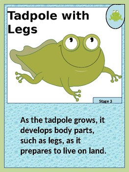 Frog and Butterfly Life Cycle Trading Cards