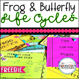 Life Cycles Frog and Butterfly FREEBIE