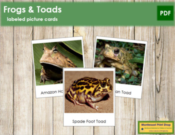 Frog and Toad Picture Cards