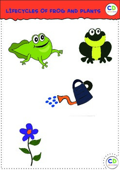 Frog and plants lifecycles cliparts