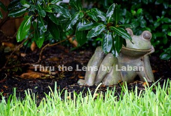 Frog in the Garden Stock Photo #203