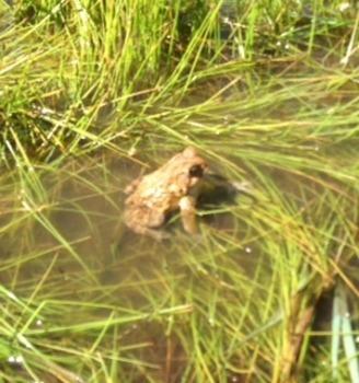 Frog k and g sentences