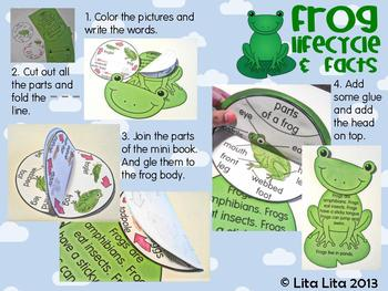 Frog life cycle and facts