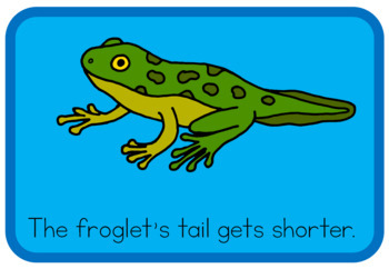Frog life cycle book (simplified version)