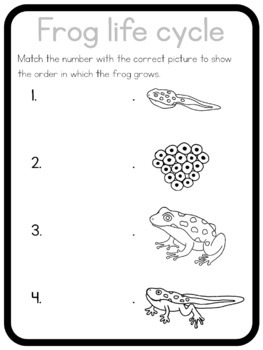 Frog life cycle circle time questions